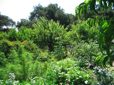 http://www.livingmandala.com/Living_Mandala/Berkeley_Food_Forest_09_files/Garden.jpg